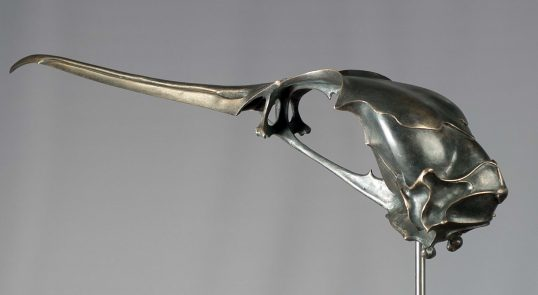 Cormorant Skull by Sue White Oakes