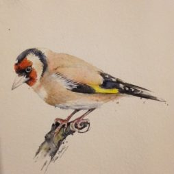Chaffinch by Julie Morrris