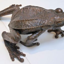 Colombian Toad by Sue White Oakes