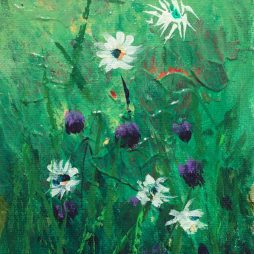Daisies by Neil Pettie