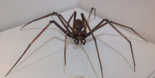 Spider by Sue White Oakes