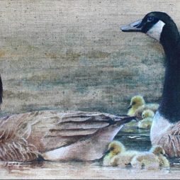 Famly of Canada Geese by Helen Welsh