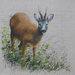 Roe Buck by Helen Welsh