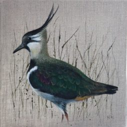 Strolling Lapwing by Helen Welsh