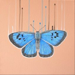 Large British Blue Butterfly by Louise McNaught
