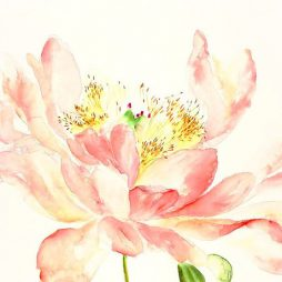 Peachy Peony by Clare Robinson