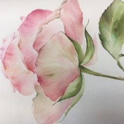Vintage Rose by Clare Robinson