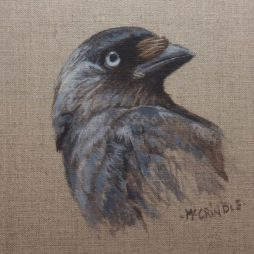 Jackdaw by Elizabeth McCrindle
