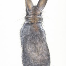 Cottontail by Paula Rowan