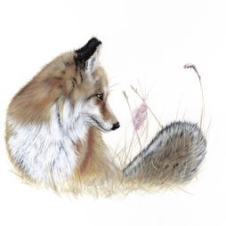 Foxy Lady by Paula Rowan