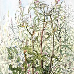 Cow Parsley and Rosebay Willow herb by Pamela Grace