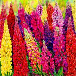 Lupins by Susie Lidstone