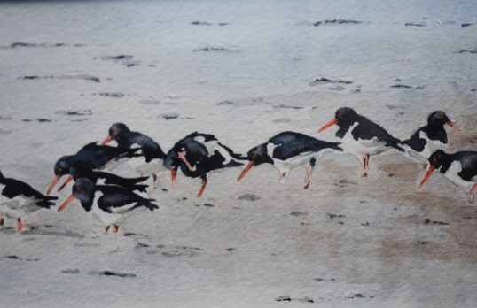 Oystercatchers by Colin Henderson