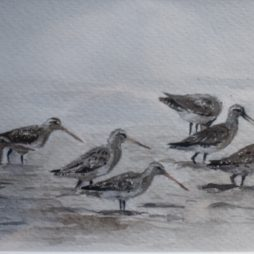 Godwits by Colin Henderson