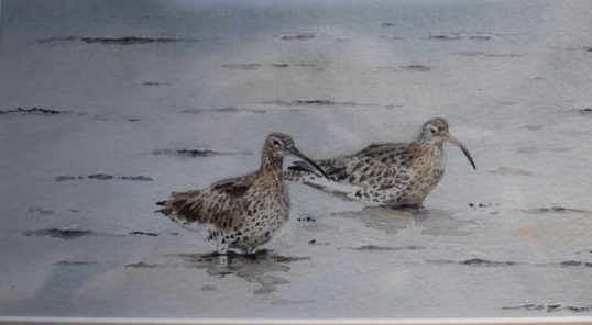 Curlews by Colin Henderson