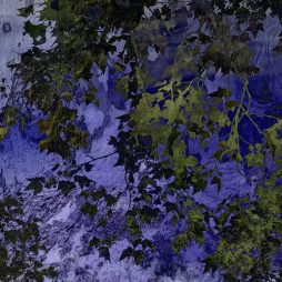 Abstract Leaves and Bark by Juliette Scott