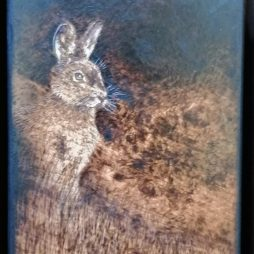 Dawn Hare by Eben Rautenbach